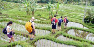 Bali Rice Paddy Trekking